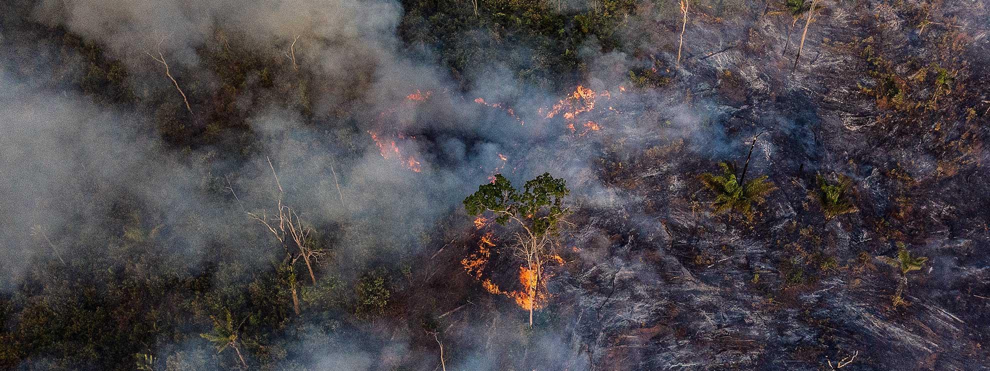 Aufnahme des Amazonaswaldes, aufgenommen von einer Drohne. © Anthony Cole / Amnesty International