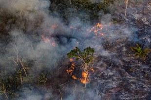 Schutz für die Rechte der Indigenen im Amazonas