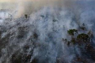 Les manquements du gouvernement alimentent les feux de forêt en Amazonie