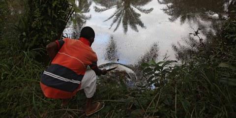 Les marécages de Barabeedom, Kegbara Dere, au Nigeria, restent contaminés par le pétrole des années après les déversements pétroliers.© Amnesty International